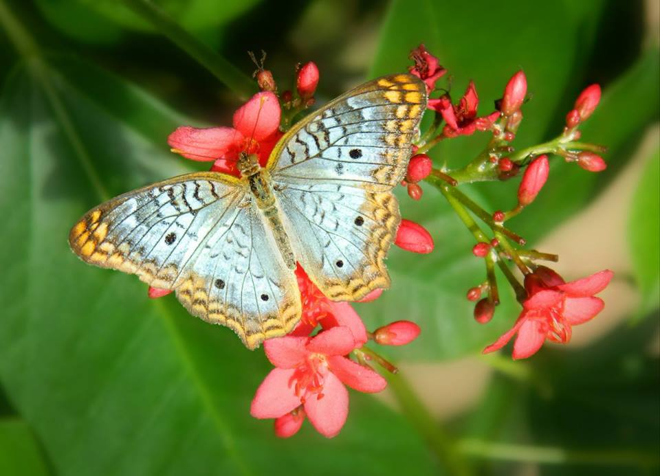 Top 5 Butterfly Gardens to Visit | Drive The Nation