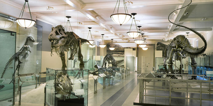 Foyer Museum Utah : Dig for dinosaurs dinosaur attractions in the u s