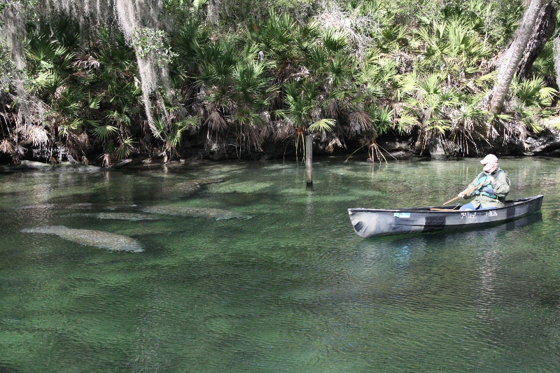 Researcher Canoeing With Manatees