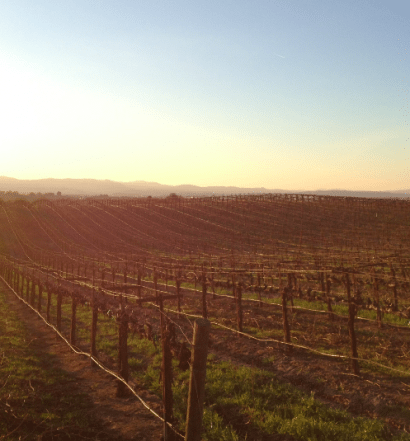 Steinbeck Vineyards in Paso Robles