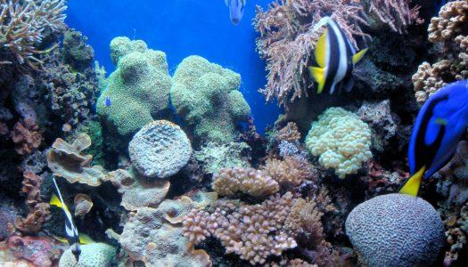Aquatic Adventures: Monterey Bay Aquarium