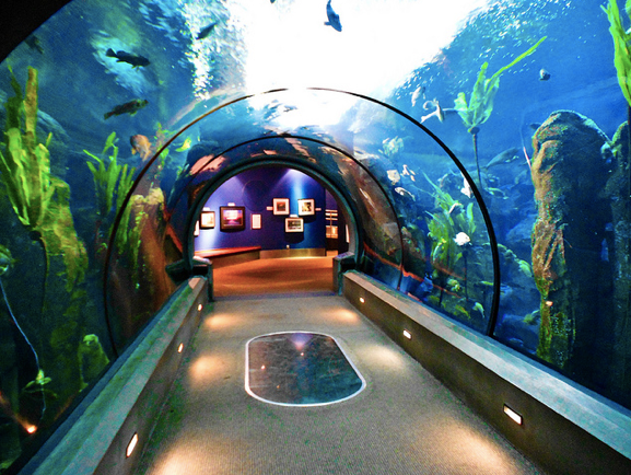 Best Aquariums In The U S