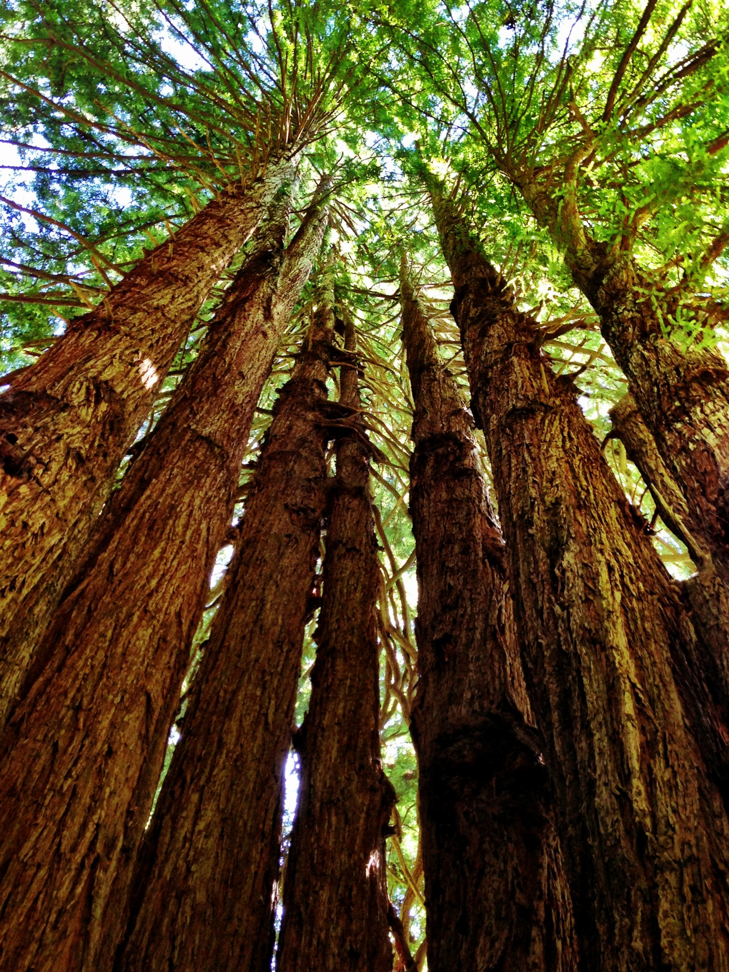 adventure to the redwoods of northern california drive