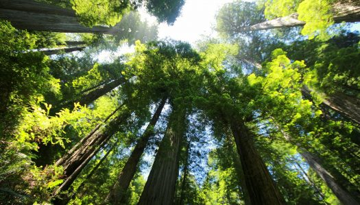 Adventure To The Redwoods of Northern California