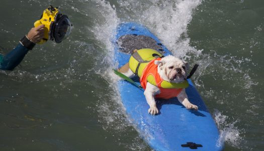 Top 10 Dog-Friendly Beaches