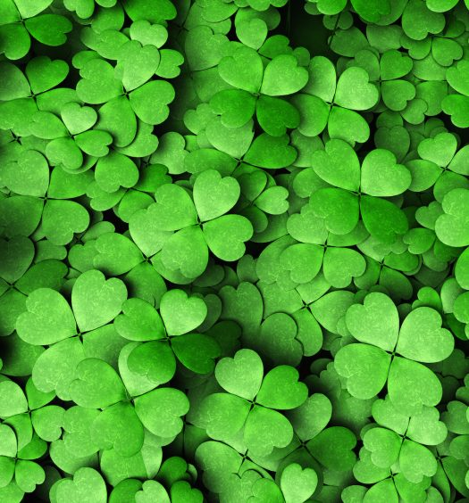 Expanse Of Four-leaf Clovers