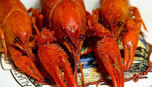 5 Crawfish Festivals You'll Want to Taste for Yourself