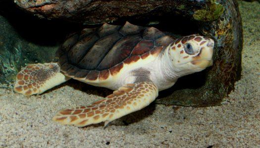 Turtle Walks