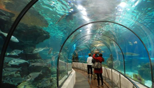 Best Aquariums In The U.S.