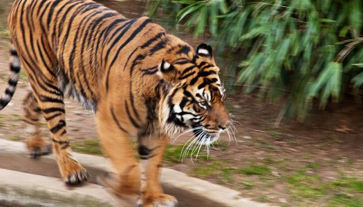 Save Money and Double the Fun at 5 Free Zoos