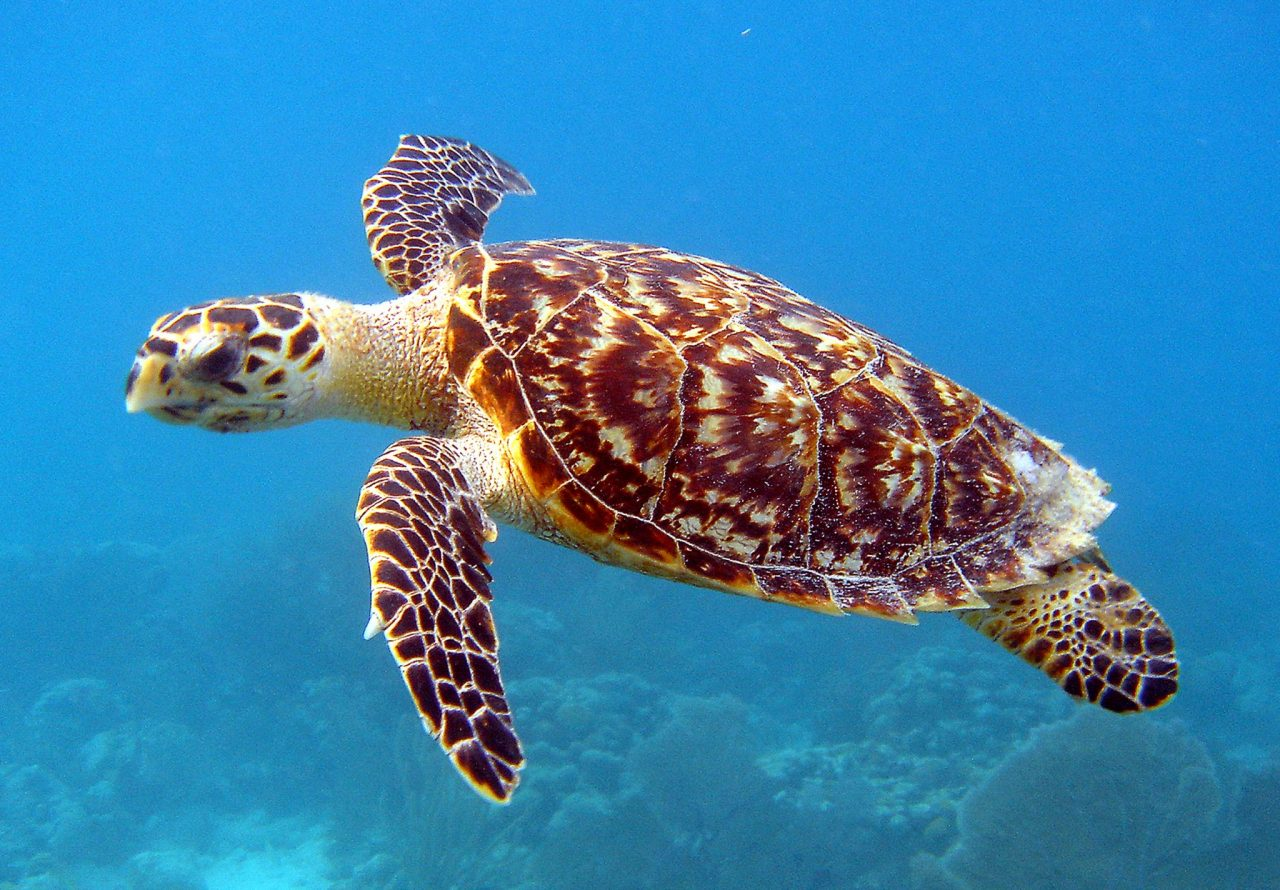 Have a Super Sea Turtle Summer