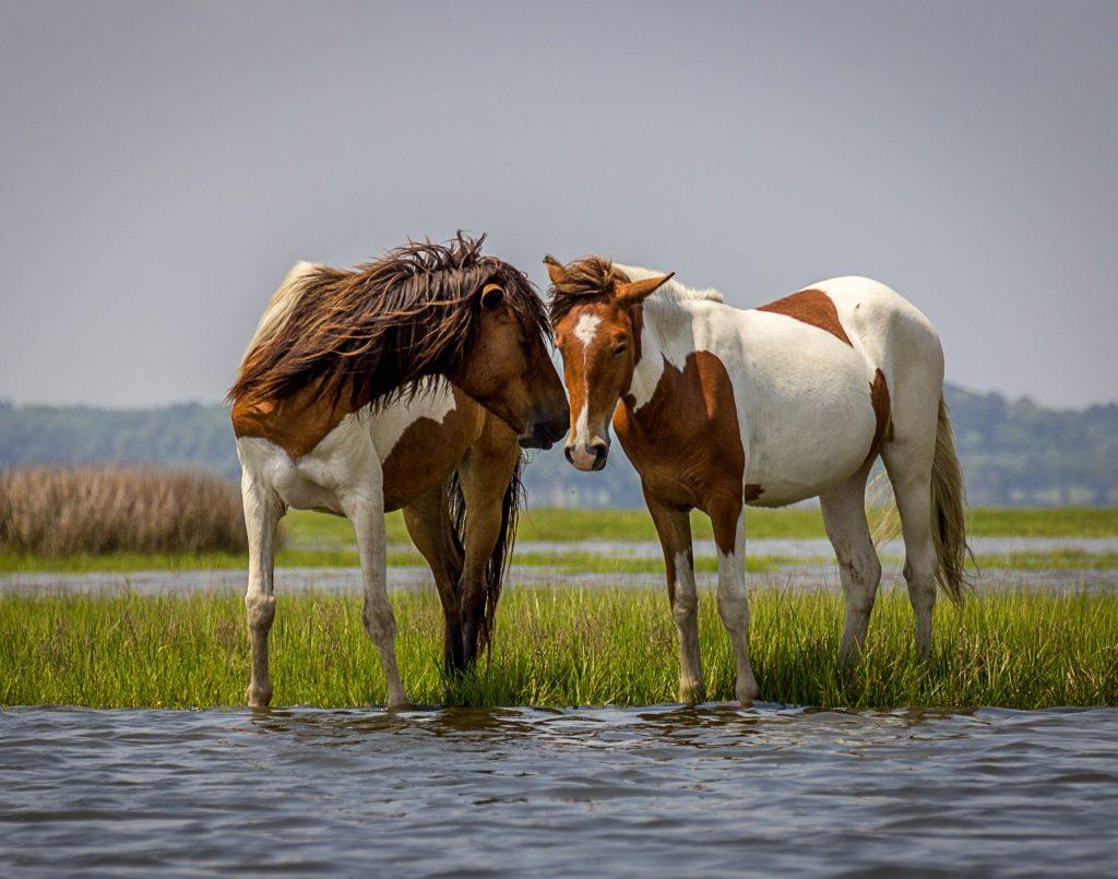 case 6 1 wild horses adm 624