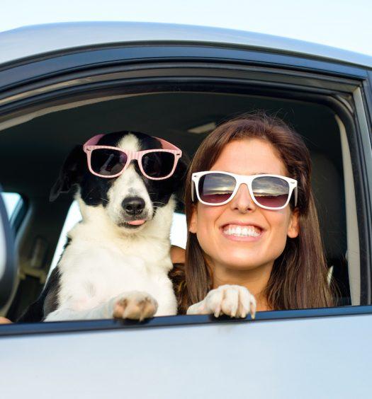 Dog Friendly Road Trip East Coast