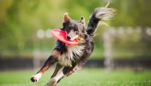 4 Dog Friendly Vacation Destinations