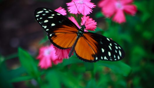 Top 5 Butterfly Gardens to Visit