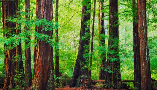 4 North American Forests for Your Bucket List