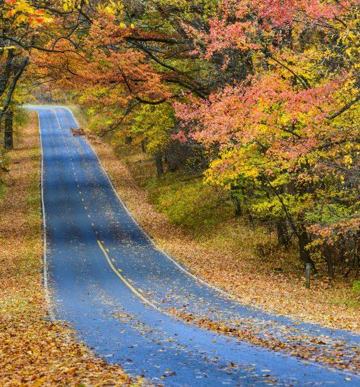 Autumn Leaves Along Road
