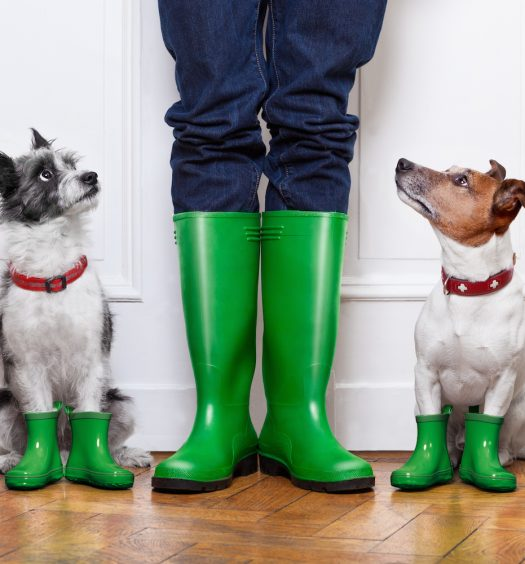 Dogs and Owner Wearing Rain Boots