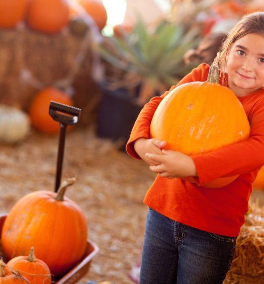 Girl Choosing A Pumpkin at A Pumpkin Patch
