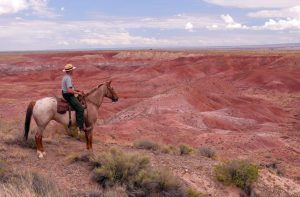 Petrified Forest National Park 4