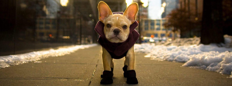 Rene-Charles NYC Winter Wear