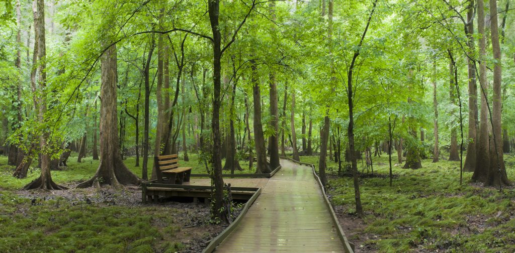 Boardwalk and Bench in Congaree National Park