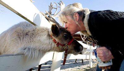 Julie Kisses Reindeer