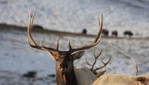 Explore the National Elk Refuge