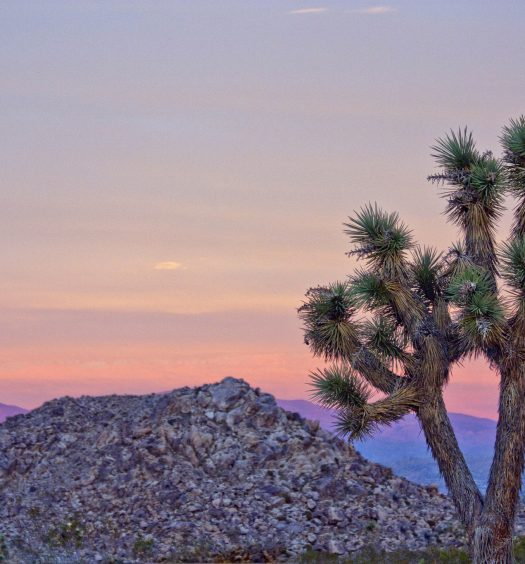 Joshua Tree at Sunset