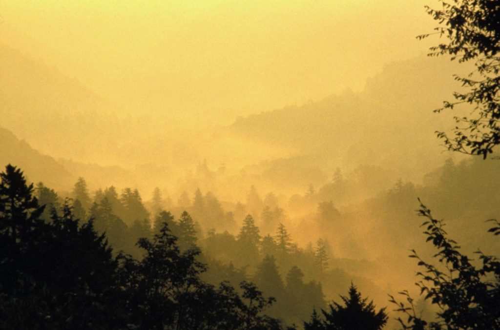 Fog in the Smoky Mountains