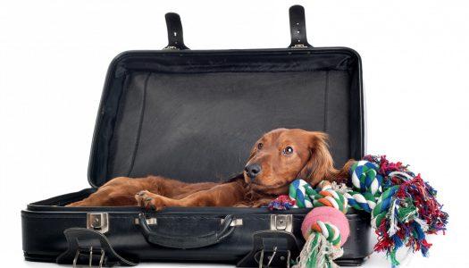 Pet Luggage Options