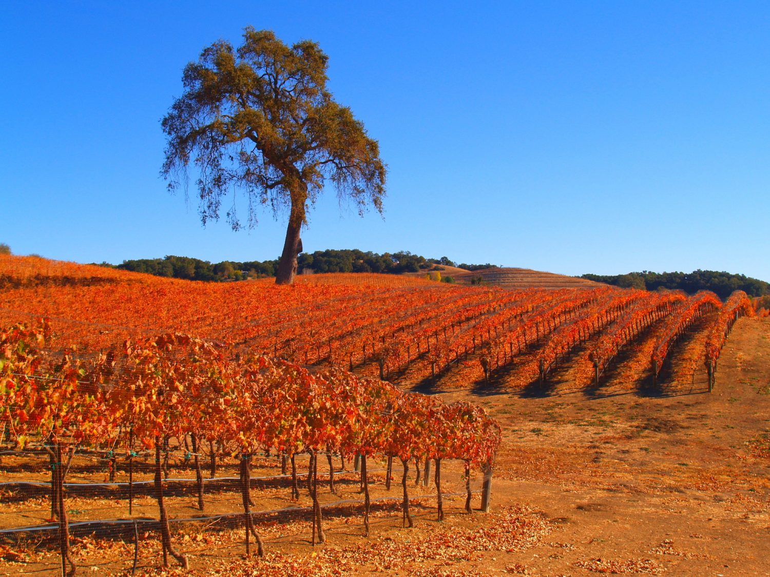 Road Trip To The Spectacular Central California Wineries