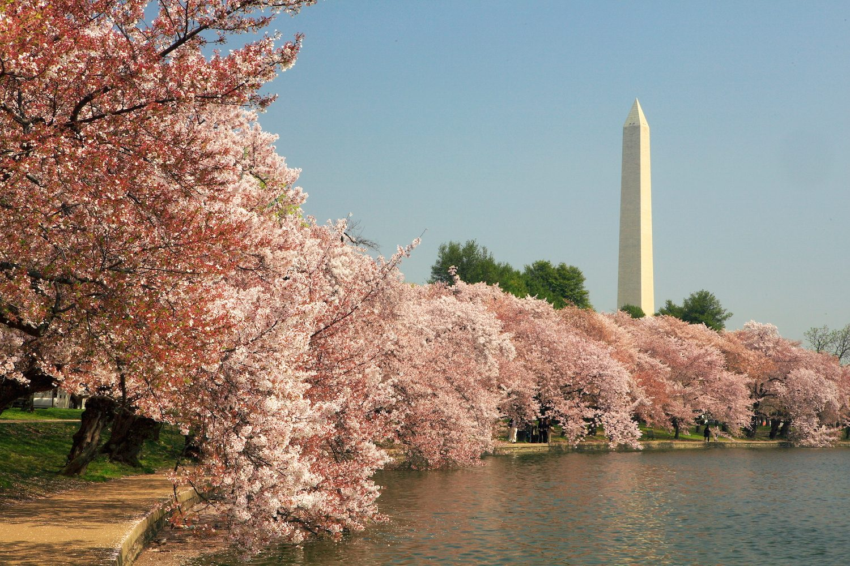Calendar Of Events For The 2014 National Cherry Blossom ...
