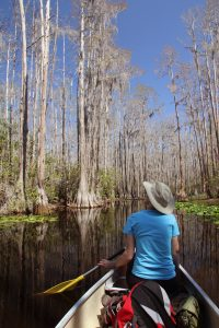 Woman Paddling a Canoe Through Okefenokee Swamp