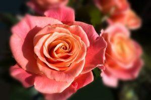 flower-garden-festival