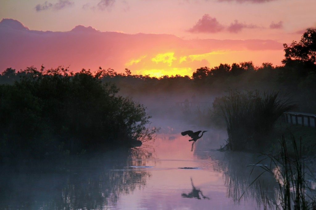 10 Must-See Places on the East Coast: The Florida Everglades