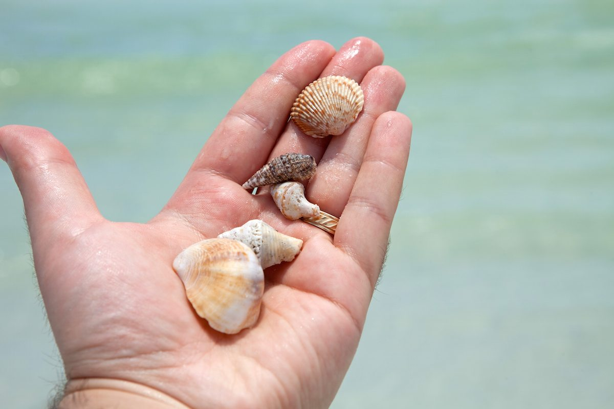 Best beaches for seashells drive the nation - Things to do with seashells ...