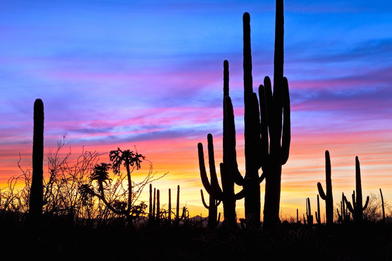 Saguaro National Park Drive The Nation