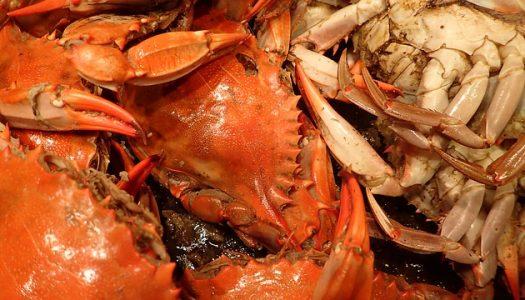 Southeast Crab Fest