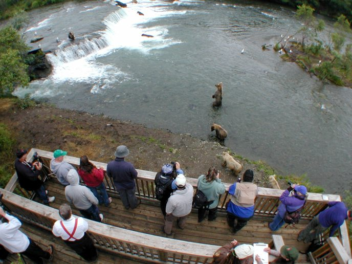 People Watching Bears