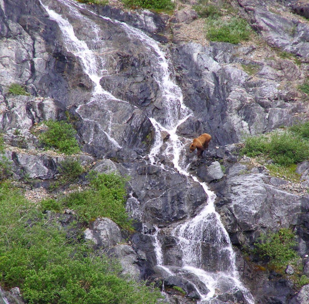 Bear and Waterfall at Glacier Bay