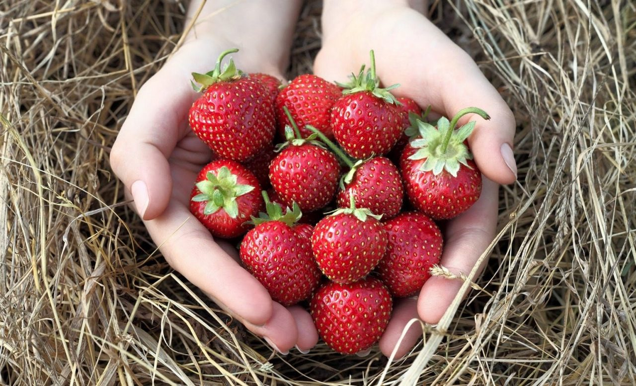 Top States Where You Can Enjoy Fresh Strawberries