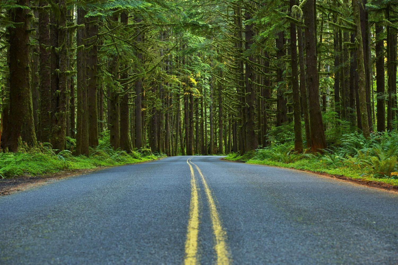 Mossy Forest Road - Washington State Olympic Peninsula