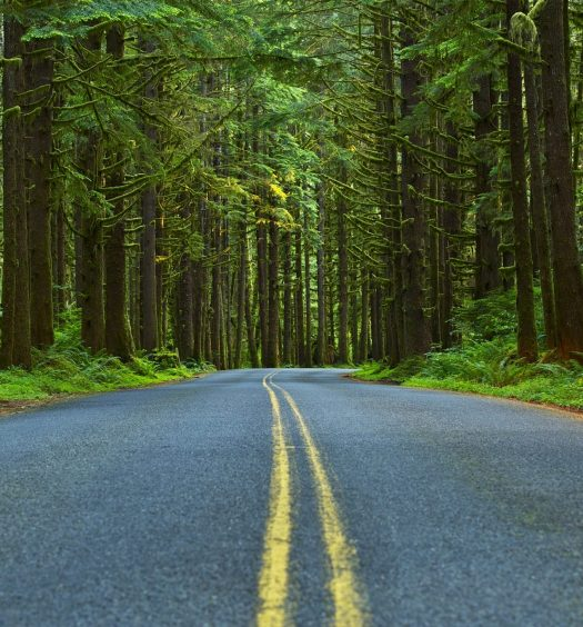 Mossy Forest Road - Washington State Olympic Peninsula