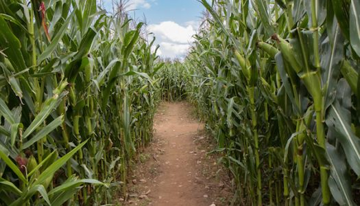 Farmstead Corn Maze & Pumpkin Festival