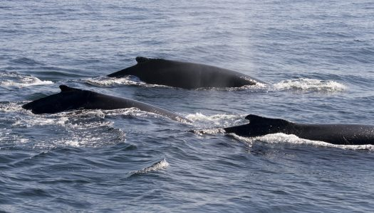 Best Beaches for Whale Watching