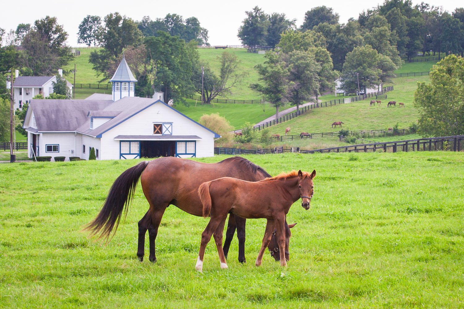Bourbon horses and national parks a kentucky road trip for Horse farm