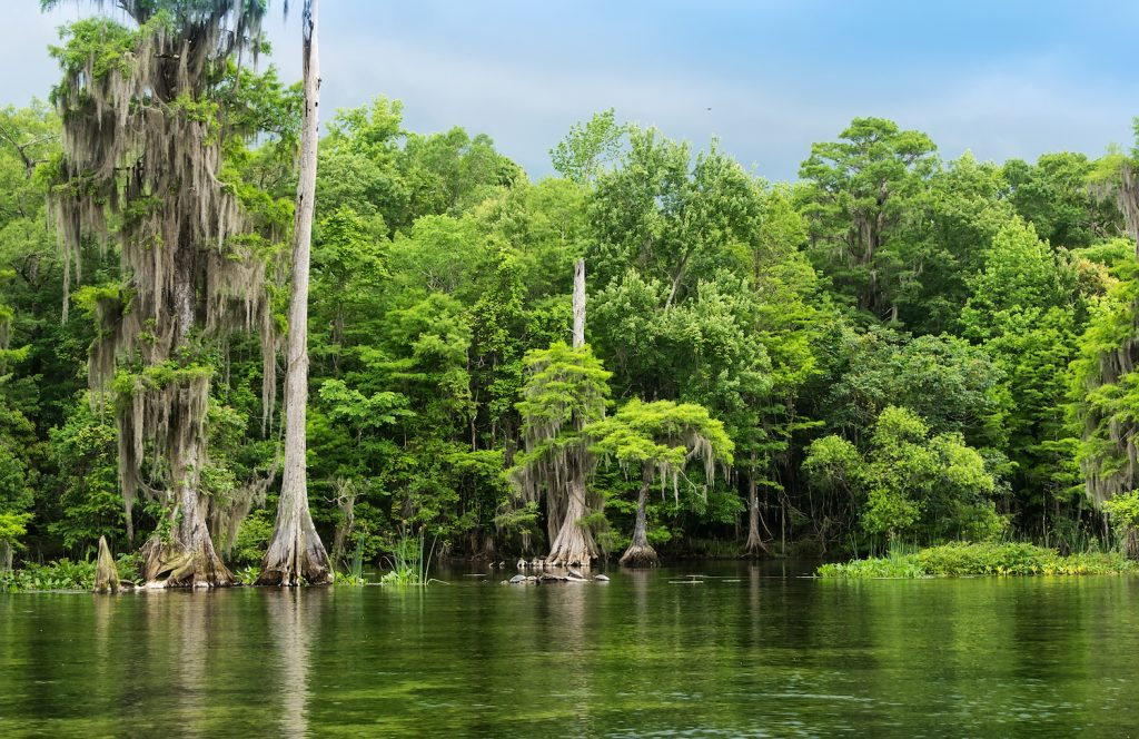 wakulla springs dating site Tallahassee, fl apartments for rent  it connects to wakulla springs and has several sinkholes,  frenchtown is a historic neighborhood dating back to 1825,.