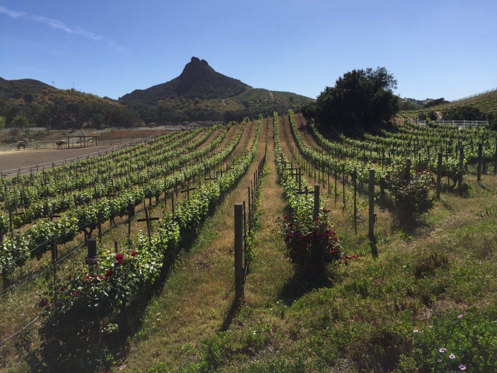 Malibu Vineyard