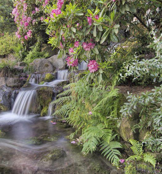 Garden Waterfall In Spring